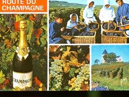 VENDANGES EN CHAMPAGNE                 JLM - France