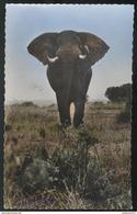 CPSM Coloniale - Afrique - Faune Africaine - L'Elephant - Circulée - Afrique