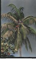 CPSM Coloniale - Afrique Noire - Cocotier - Non Circulée - Afrique