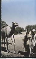 CPSM Coloniale - A.E.F. - Un Dromadaire - Non Circulée - Afrique