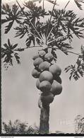 CPSM Coloniale - Flore Africaine - Fruits Du Papayer - Circulée - Afrique