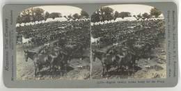 Photo Stéréoscopique : English Cavalry Horses Ready For The Front ( Cavalerie Anglaise, Chevaux, Guerre, War ) - Photos Stéréoscopiques
