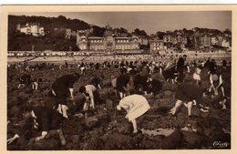 Le Havre La Plage La Peche Aux Moules - Le Havre