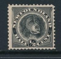 NEWFOUNDLAND, 1894 ½c Black Fine, Unused No Gum, Cat £10 - Newfoundland