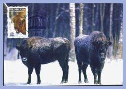 CPM - Unesco 26-11-2005 - Vaches Et Bovins (Pologne) - Foret Bialowieza. Premier Jour - Bisons - Mucche