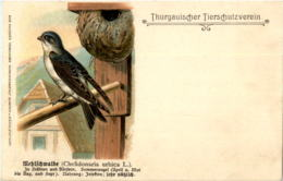 Thurgauischer Tierschutzverein - Vogel Bird - TG Thurgovie