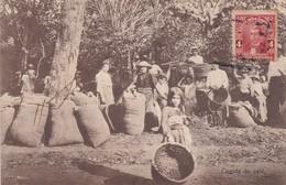 COGIDA DE CAFE. ANTONIO LEHMAN. GROUP OF FOLK PEOPLE. CIRCULE 1913. COSTA RICA-RARE- BLEUP - Costa Rica