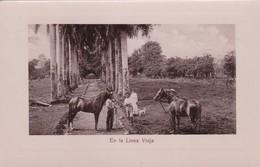 EN LA LINEA VIEJA. LIBRERIA LEHMANN. LOCAL PEOPLE WITH HORSES. CIRCA 1920s. ETAT DELUXE.COSTA RICA-RARISIME- BLEUP - Costa Rica