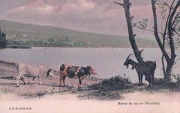 Vaches Et Chèvre Au Bord Du Lac De Neuchâtel (20) - Elevage