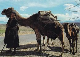 KUCHI CARAVAN. AFGHANISTAN. CIRCULEE 1977 A AUSTRIA, 2 DIFFERENT TIMBRE. CAMELIDOS- BLEUP - Afghanistan