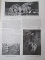 1913  Statues D Argile  Caverne TUC  D AUDOUBERT ARIEGE   Comte Begouen - Vieux Papiers