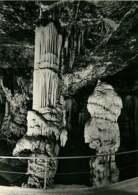 241118 - SLOVENIE POSTOJNSKA JAMA - POSTOJNA Grotte D'Adelsberg - - Slovénie