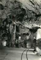 241118 - SLOVENIE POSTOJNSKA JAMA - POSTOJNA Grotte D'Adelsberg - Stalagtite - Slovénie