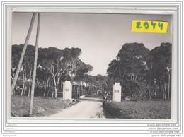 9612  POSTCARD AK PHOTO 2946 CAMP PIERRE GOSSELIN 1° REGIMENT DE TIRAILLEURS ALGERIENS FOYER - Algeria