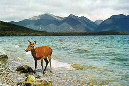 1 AK New Zealand * Der Lake Manapouri Im Fiordland-Nationalpark - Seit 1990 UNESCO Weltnaturerbe * - Neuseeland