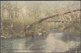 Scene In Lucas' Grove, Wetaskiwin, Alberta, 1910 - W J Stephenson Postcard - Alberta