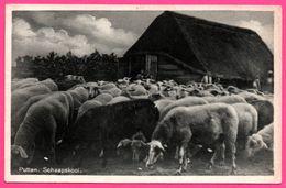 Putten Schaapskooi - Bergerie - Mouton - Uitg. H. SONNENBERG - 1946 - Putten