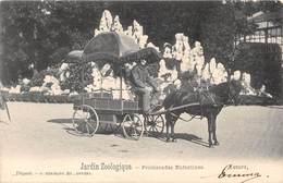 BELGIQUE - ANVERS - Jardin Zoologique - Promenades Enfantines- Attelage Poney - Antwerpen