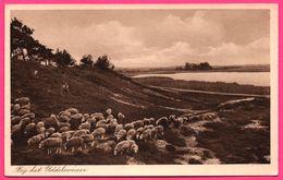 Bij Het Uddelermeer - Moutons - Oblit. ELSPEET - Uitg. G. DIJKGRAAF - 1957 - Nederland