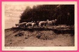 Een Beschut Plekje - Moutons - Uitg. G. DIJKGRAAF - 1941 - Nederland