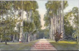 Talipot Palm Avenue In Teh Royal Botanic Garden - Paradeniya - Kandy - Ceylon - HP1509 - Sri Lanka (Ceylon)