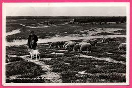 """Schaapherder Op De Veluwe - Moutons - Berger - Vacantiecentrum """" Heidebad """" Epe - VAN LEER'S - 1956 - Epe"""