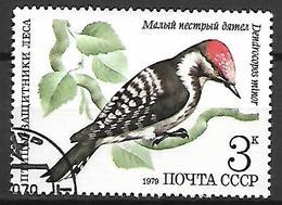 RUSSIE  /  URSS     -    OISEAU  /  PIC   -    Oblitéré - Climbing Birds