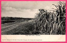 Cpa - Louisiana - Sugar Cane Field - Louisiane - Champ De Canne à Sucre - Published By NEW COMPANY N° 261 - Etats-Unis