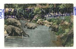 Faune Africaine. Eléphants Au Bain. Hoa-qui 1506 - Éléphants