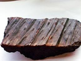 Fossiles Plante Du Carbonifère Carboniferous Plant Pinakodendron Départ 1 € !!!!! - Fossiles