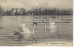 74 (  Haute Savoie ) - Lac D'ANNECY - Les Cygnes - Annecy