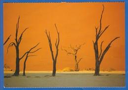 Namibia; Namibrand; Dead Vlei - Namibia