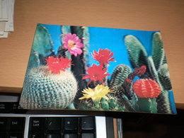 3D Postcards Cactus PK 91 - Cactus