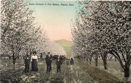 Apple Orchard In Full Bloom - Paonia - Colo. (110077) - Etats-Unis