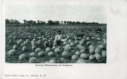 Growing Waermelonss By Irrigation (110083) - Non Classés