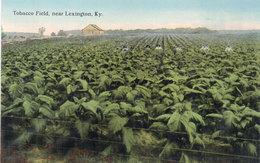 Tobacco Field, Near Lexington, Ky - Scène Agricole  (110087) - Lexington