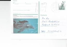 "GERMANY 1990 - DUISBURG -POSTKARTE -OBL  ""INTERNATIONALES MUSIK FESTIVAL SERGIU PROKOFJWE.... ""12.11.90- ZOO DRUISBURG I - Duisburg"