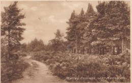 AQ97 Marley Common, Near Haslemere - Surrey