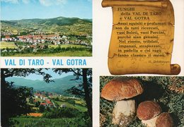 Parma - Val Di Taro - Val Gotra - Funghi - Fg - Parma
