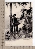 Croquis Alpestre - Chèvre / Ziege / Goat / Capra - Animaux & Faune