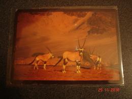 BELLE CARTE DE NAMIBIE   DESERT DWELLERS  C - Namibie