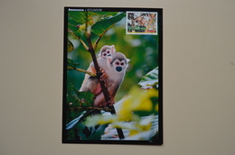 Ecuador Maxicard Carte Maximum Singe Monkey Mono Equateur - Monkeys