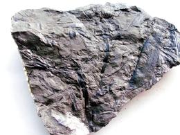 Fossiles Plante Du Carbonifère Carboniferous Plant Asterophyllites Longifolius. Départ 1 € !!!!! - Fossiles