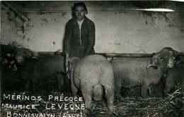 220118 - 02 BONNESVALYN - Mérinos Précoce Maurice LEVEQUE - Scène Agricole Mouton Bélier Problème Vétérinaire - France