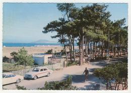 66 - Argelès-sur-Mer         L'Allée Des Pins Et La Plage - Argeles Sur Mer