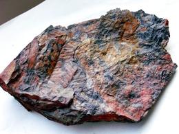 Fossiles Plante Du Carbonifère Carboniferous Plant Neuropteris Obliqua. Départ 1 € !!!!! - Fossiles