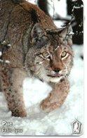 Lynx Animal Jungle Chat Cat Télécarte Bulgarie Mobika Phonecard (D490) - Bulgarie