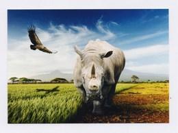 DARß, Darßer Naturfilmfestival 2018 - Nashorn, Adler - Rhinocéros