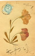 FLEUR SECHEE(OEILLET) - Flores