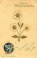 FLEUR SECHEE(RENONCULE) - Flores
